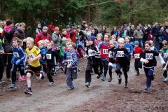 """Angefeuert vom Publikum starteten am Sonntag im """"Großen Holz"""" 24 junge Läufer über die 700m."""
